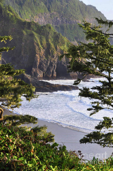 Photograph - Coastal Bluff by Kirt Tisdale