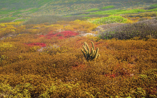 Cabrillo Photograph - Coastal Cactus by Joseph Smith