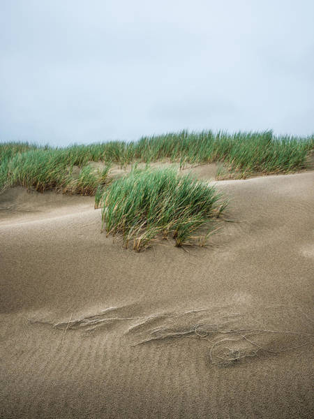 Oregon Dunes Photograph - Coastal Dunes by Alexander Kunz