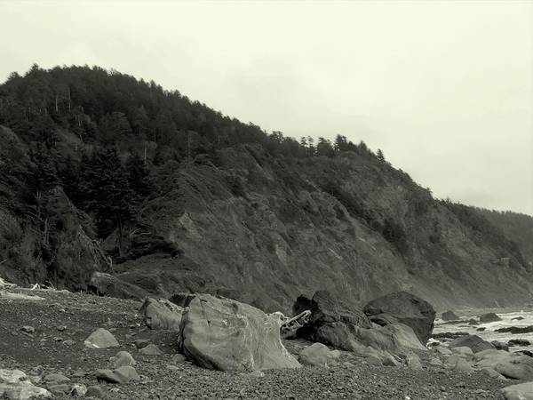 Photograph - Coastal Find by Vincent Green