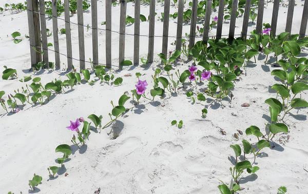Photograph - Coastal Flowers by Dorothy Cunningham