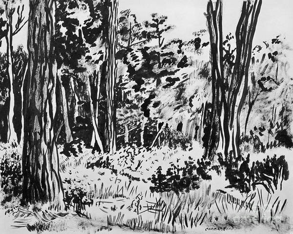 Wall Art - Drawing - Coastal Forest by Brian  Commerford