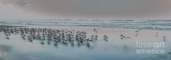 Saint Augustine Beach Wall Art - Photograph - Coastal Gathering by Janal Koenig