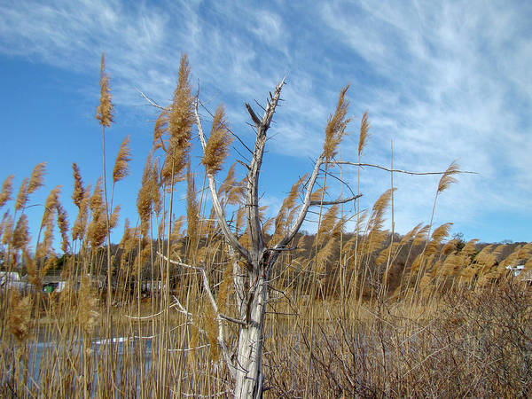 Photograph - Coastal New England Marsh Landscape by Mother Nature