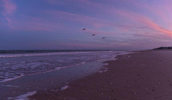 Oceanfront Photograph - Coastal Patrol by Betsy Knapp