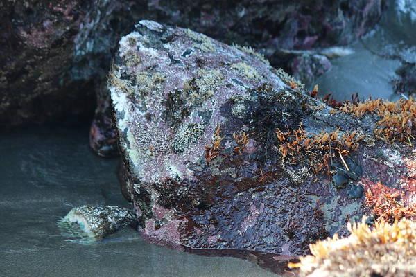 Photograph - Coastal Rocks  by Christy Pooschke