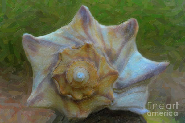 Photograph - Coastal Shell by Dale Powell