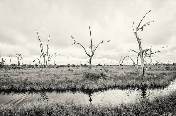 Photograph - Coastal Skeletons by Andy Crawford
