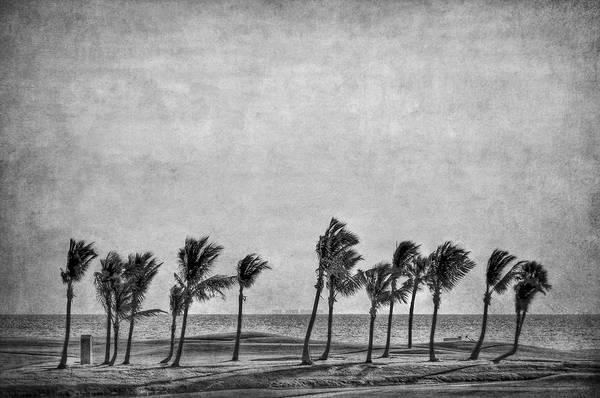 Boca Grande Photograph - Coastal Winds by Evelina Kremsdorf