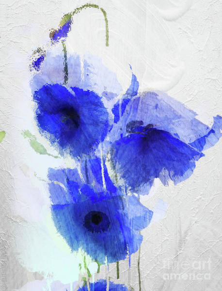 Wall Art - Painting - Cobalt Poppies by Mindy Sommers
