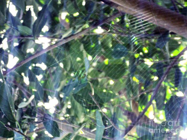 Photograph - Cobweb Tree by Megan Dirsa-DuBois