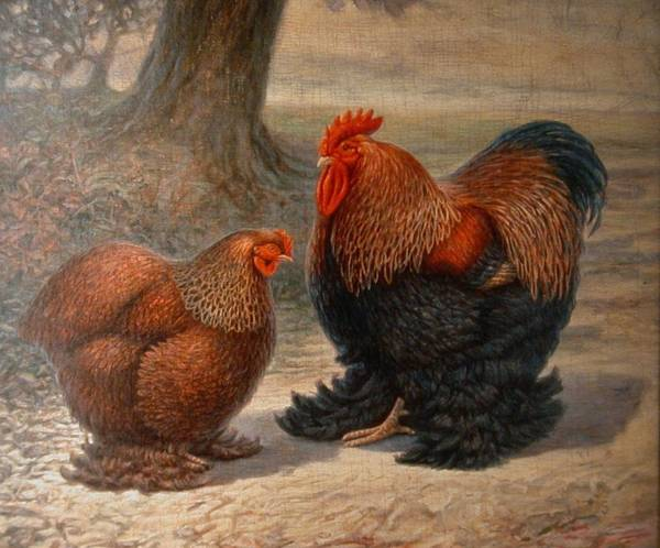 Hans Droog Wall Art - Painting - Cochin Chickens by Hans Droog
