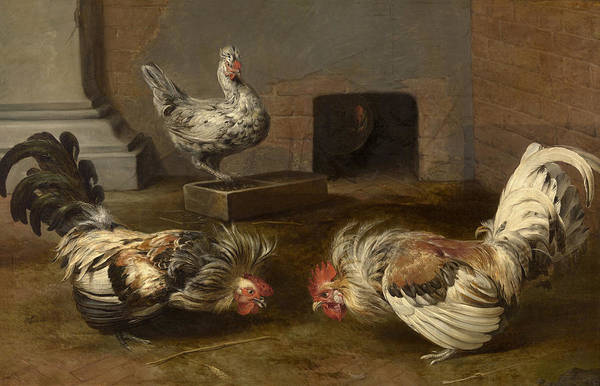 Beauty Wall Art - Painting - Cock Fight by Frans Snyders