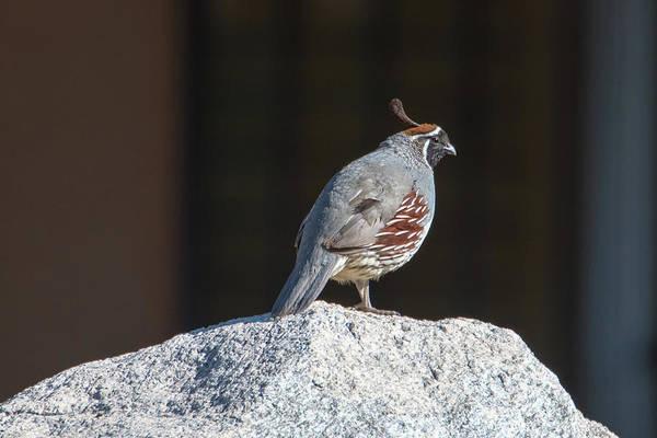 Photograph - Cock Of The Rock by Dan McManus