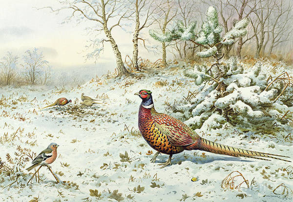Pheasant Painting - Cock Pheasant And Chaffinch by Carl Donner