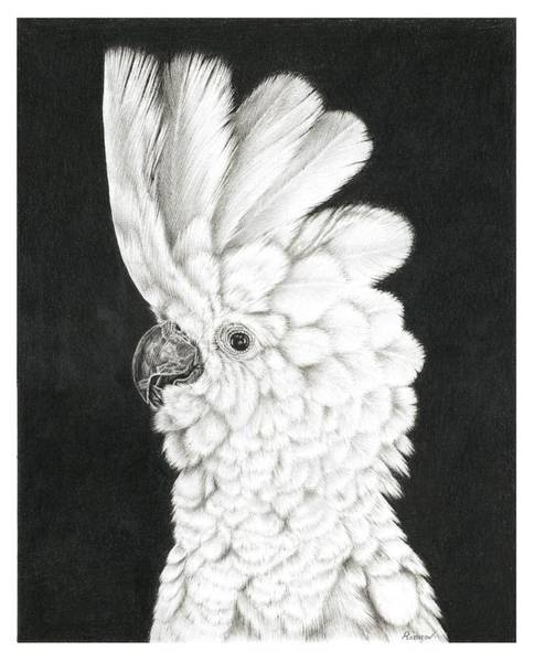 Drawing - Cockatoo by Remrov