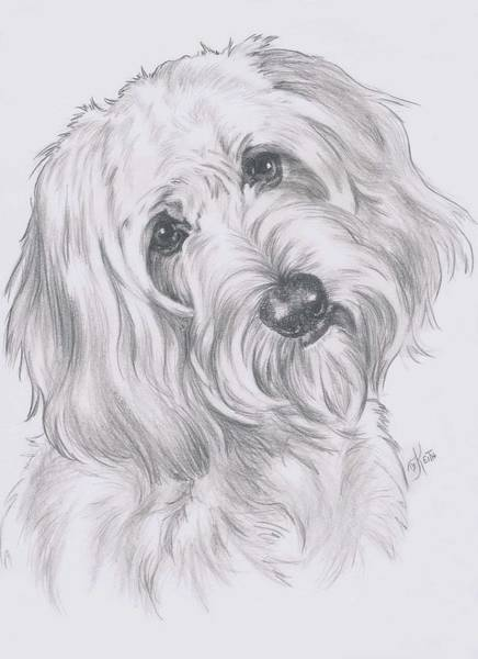 Mutt Drawing - Cocker-poo by Barbara Keith