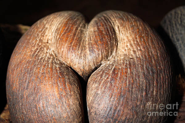 Photograph - Coco De Mer  by Juergen Held