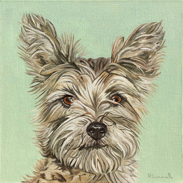 Yorkshire Terrier Painting - Coco II by Nathan Rhoads