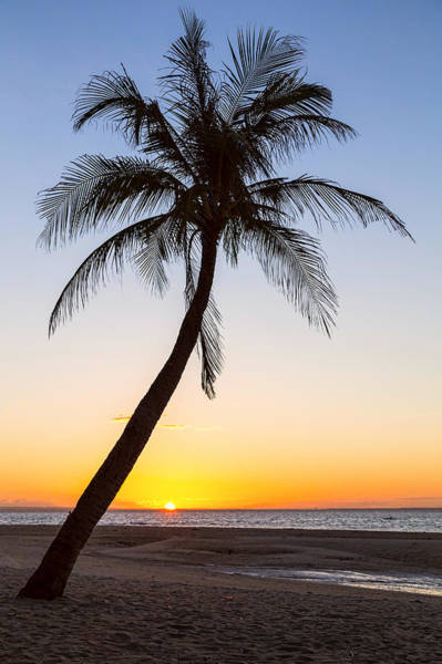 Photograph - Coco Mo Tropical Sunrise by James BO Insogna