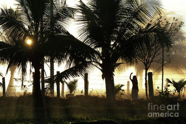 Photograph - Coconut Grove by Tim Gainey