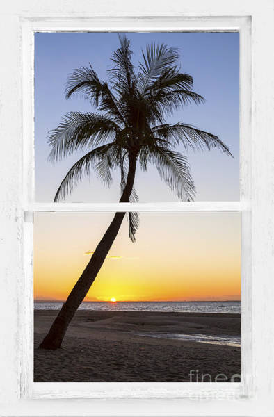 Photograph - Coconut Palm Tree Tropical Sunset Window View by James BO Insogna