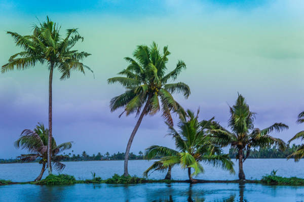 Kerala Photograph - Coconut Trees At  Backwaters Kerala, India  by Art Spectrum