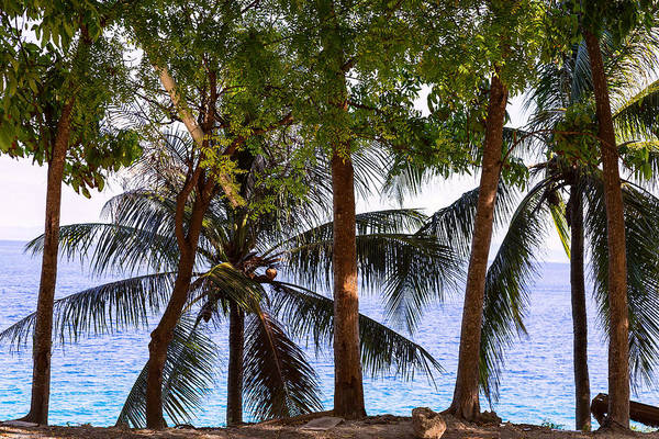 Photograph - Coconut Trees Ocean Scenic View by James BO Insogna