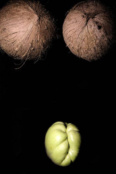 Photograph - Coconuts And A Coyote Squash Cunt by Jason Stoll