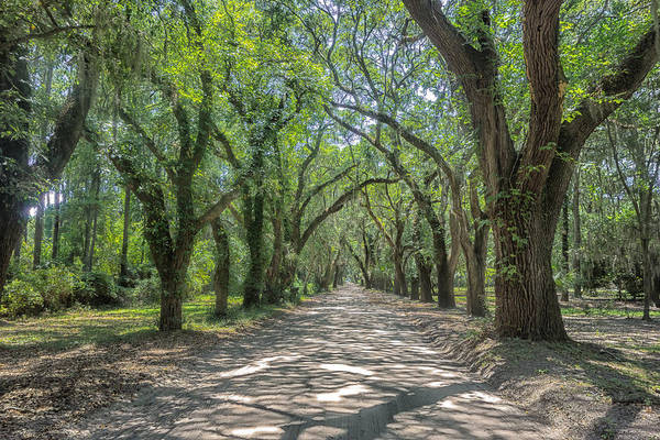 Photograph - Coffin Point Roadway by Patricia Schaefer