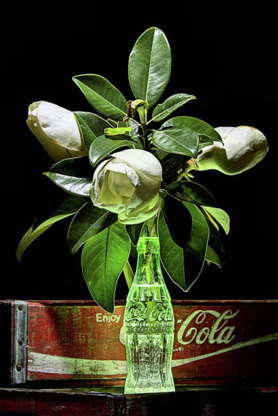 Photograph - Coke And Magnolia Still Life by JC Findley