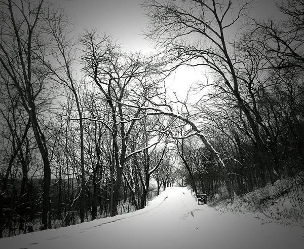 Photograph - Cold Black Road by Wild Thing