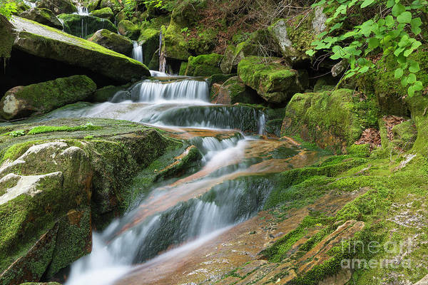 Photograph - Cold Brook - Randolph New Hampshire by Erin Paul Donovan