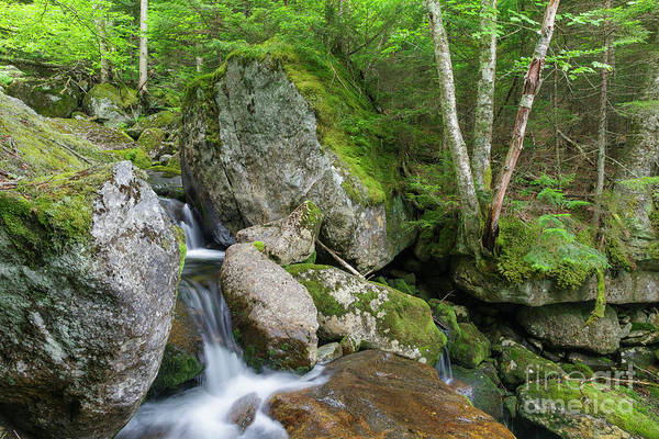 Photograph - Cold Brook - White Mountain National Forest by Erin Paul Donovan