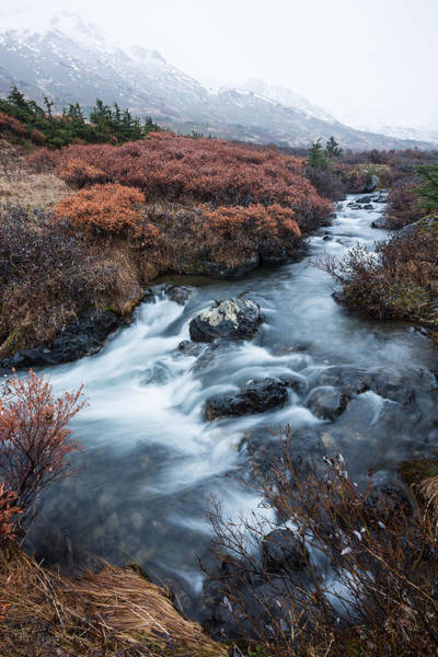 Photograph - Cold Creek In Autumn by Tim Newton