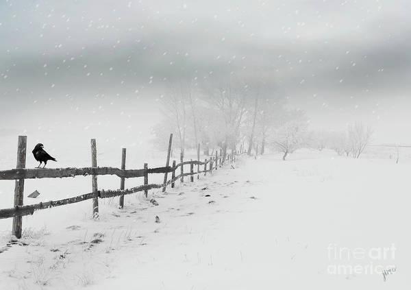 Raven Digital Art - Cold Crow by Jim Hatch