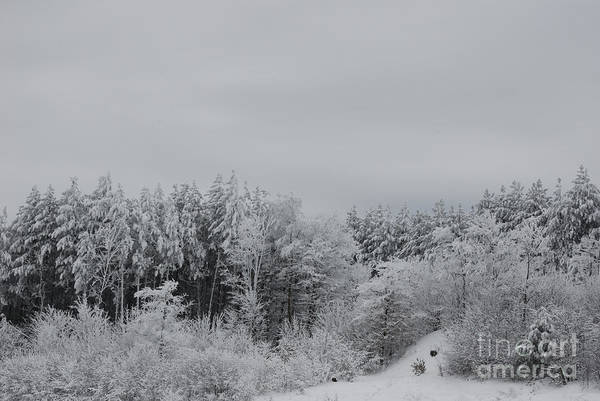 Wall Art - Photograph - Cold Mountain by Randy Bodkins