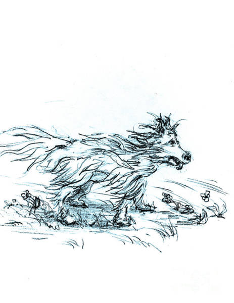 Hund Drawing - Cold Paws - Loves The Wind by Dorothy Hilde