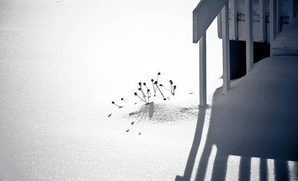 Greyscale Photograph - Cold Shadows by Maggie Terlecki