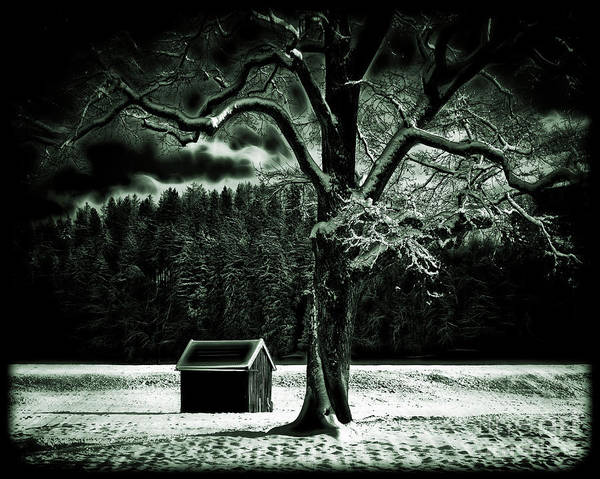 Photograph - Cold Spell by Edmund Nagele