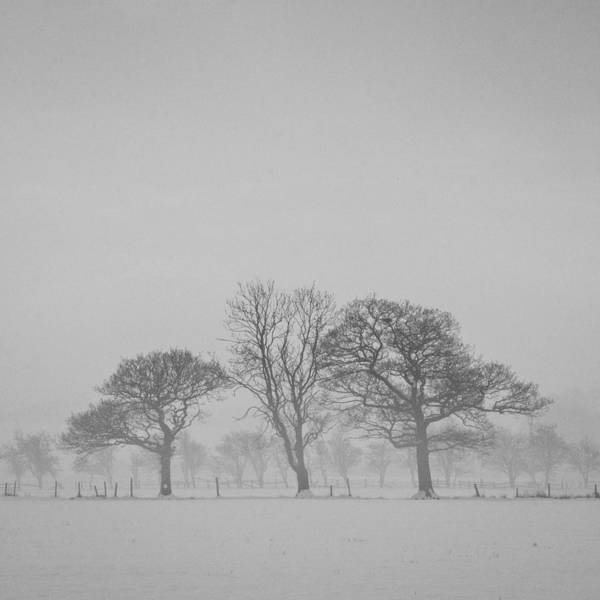 Cold Day Photograph - Three Trees by Chris Dale