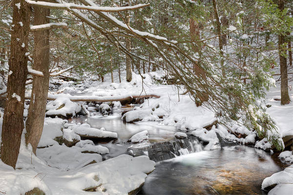 Photograph - Cold Winter Pool by Bill Wakeley