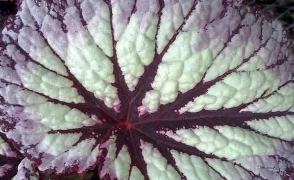 Photograph - Coleus Leaf 1 by Duane McCullough
