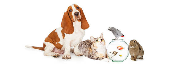 Wall Art - Photograph - Collage Of Domestic Pets Together by Susan Schmitz