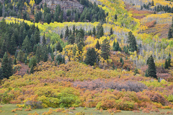 Photograph - Collage Of Fall Color Near Durango by Ray Mathis