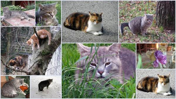Vesna Martinjak -  Collage Of Photos Cats