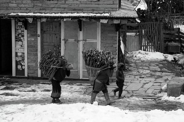 Photograph - Collecting Firewood by Aidan Moran