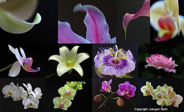 Photograph - Collection Of Flowers Over Black  by Juergen Roth