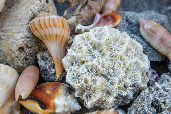 Photograph - Collection Of Seashells On The Beach Iv by Debra and Dave Vanderlaan