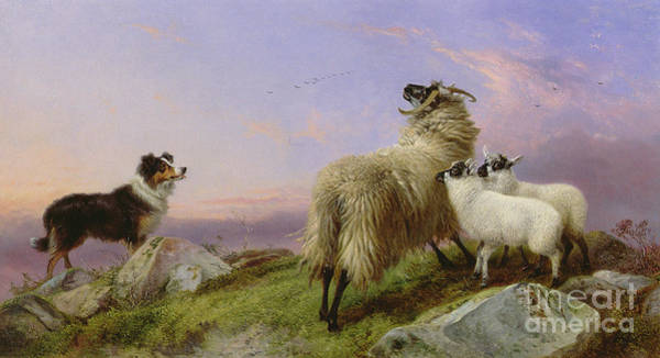 Scared Painting - Collie, Ewe And Lambs by Richard Ansdell